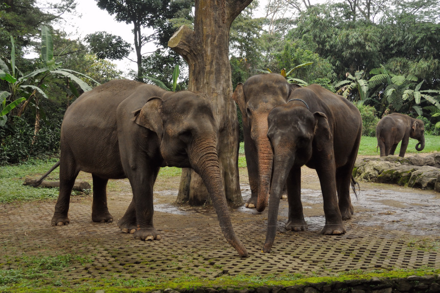 Indonesia Safari Tours Taman Safari Indonesia