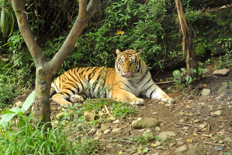 Indonesia Safari Tours Tour to Taman Safari Park