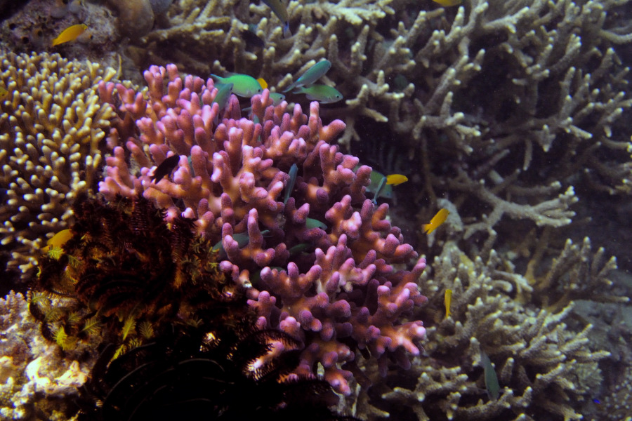 Pictures Of Corals Stony Hard Corals From The Coral