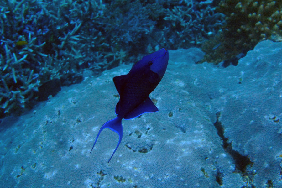 photos of fish and turtles from tropical reefs in raja